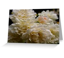 white roses and a light pink bud Greeting Card