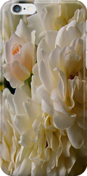 white roses and a light pink bud by dedmanshootn