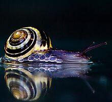 Snail by Henk Olieman