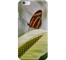 Exotic Butterfly iPhone Case/Skin