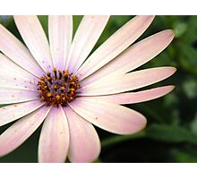 Pink Flower Close Up Photographic Print
