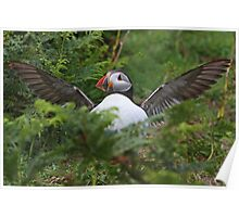 Flasher Puffin Poster