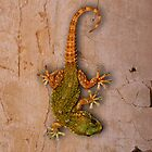 Gecko by pahit