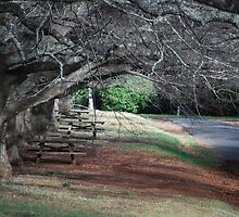 MOUNT WILSON PICNIC AREA by Phil Woodman