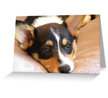 Corgi Pup Greeting Card