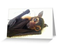 Raiden - Spectacled Flying Fox Greeting Card