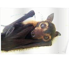 Raiden - Spectacled Flying Fox Poster