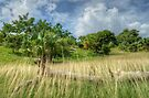 Country Side in Nassau, The Bahamas by Jeremy Lavender Photography