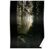 Afternoon in the Forest Poster