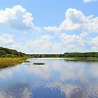 Huntington Beach State Park by Dawne Dunton