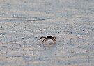 Crabby by ©Dawne M. Dunton