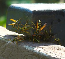 Yellowjackets and bow ties by MarianBendeth