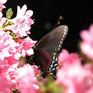 Butterfly in the Garden by JeffeeArt4u