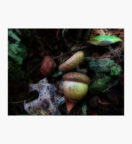 Are you nuts Photographic Print