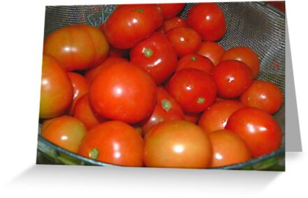 Red,Red Tomatoes by MaeBelle