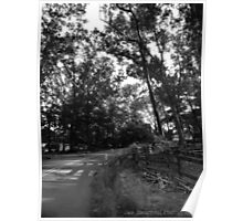 Forest Drive Poster