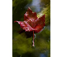 Crimson in the Water Photographic Print