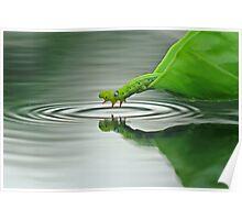 Joking Caterpillar Poster