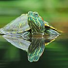 Turtle Reflection by udadennie