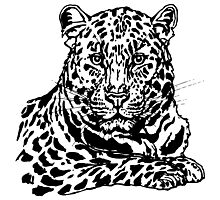 Amur leopard ink sketch Photographic Print
