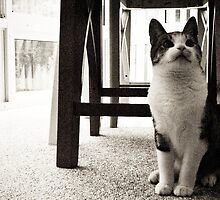 Curious Mr. Whiskers by benjaminperfect