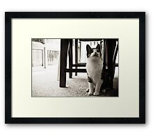 Curious Mr. Whiskers Framed Print