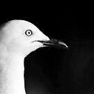 Gull by Louise Linossi Telfer