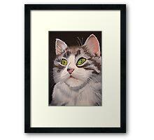 Long Haired Tabby Cat Portrait Framed Print