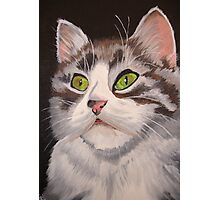 Long Haired Tabby Cat Portrait Photographic Print