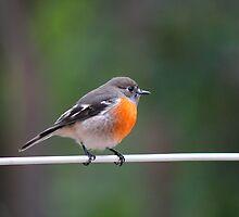 Feathered Friend by Jillian Holmes