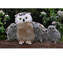 Rescued Owlets get a stuffed toy Mum! Photographic Print