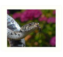 Grass Snake Art Print