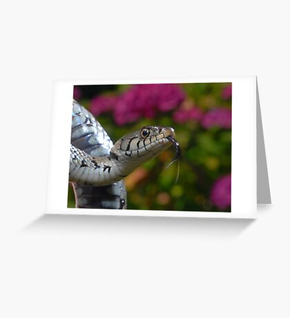 Grass Snake Greeting Card