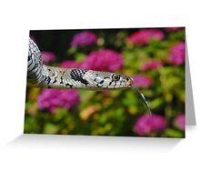 European Grass Snake Greeting Card
