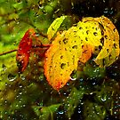 Rainy Autumn Day by Keld Bach