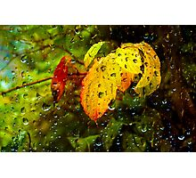 Rainy Autumn Day Photographic Print