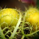 Passion Fruit by Rainy
