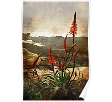 Red Hot Pokers, South Africa Poster