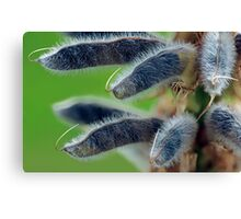 Fuzzy Lupins Canvas Print