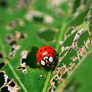 Ladybird by EkaterinaLa
