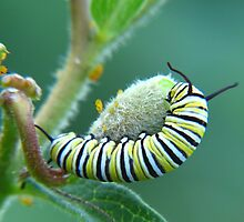Will somebody please get these aphids off my food? by Ron Russell