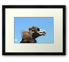 Vulture from Mongolia Framed Print