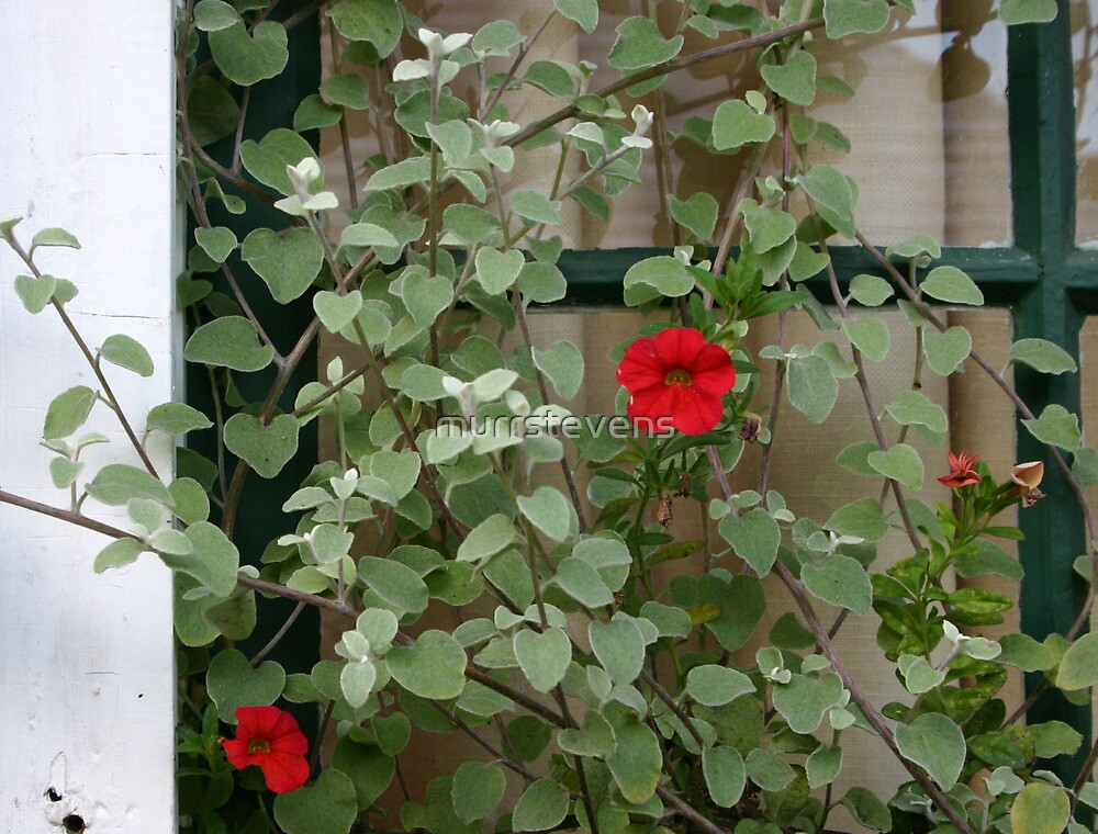From the Window Box by murrstevens