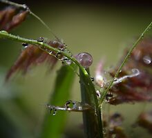 a few drops by michelle meenawong