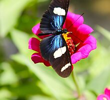 Butterfly on Pink by Citisurfer