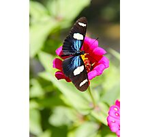 Butterfly on Pink Photographic Print