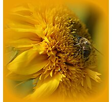 Sunflower with Bee Photographic Print