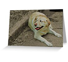 That dog's got some crazy eyes! Greeting Card