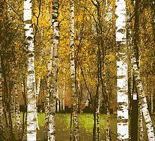 Urban Birches by Alexandra Lavizzari