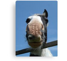 My Favourite Horse Canvas Print